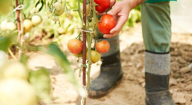 Store Bought to Home Grown – 6 Reasons to Grow Your Own Food