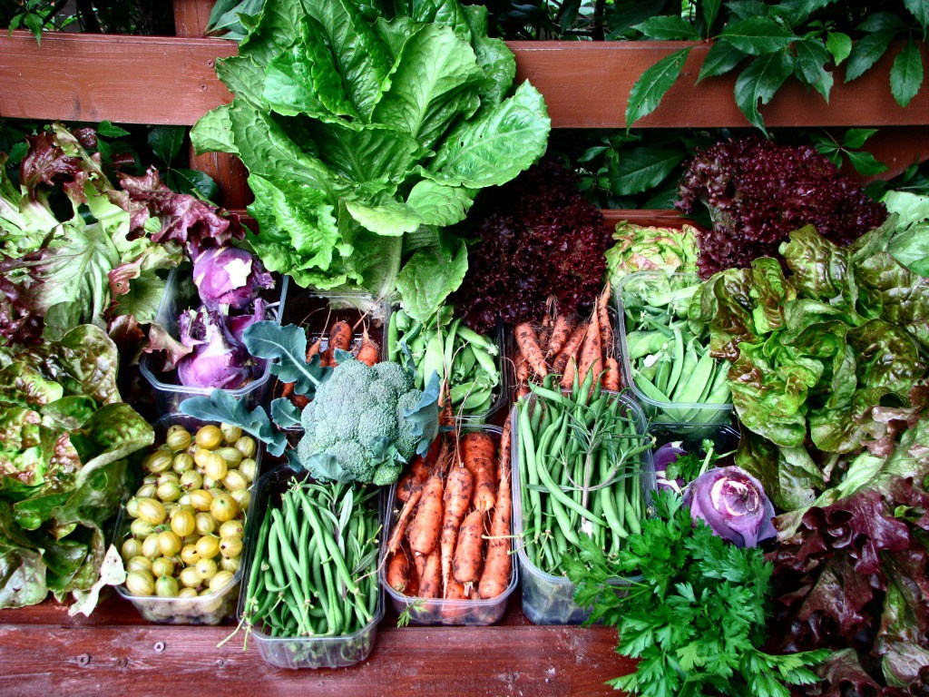 How to Get the Most Food from Your Survival Garden
