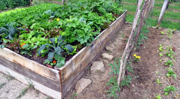 Why To Use Permaculture For Survival