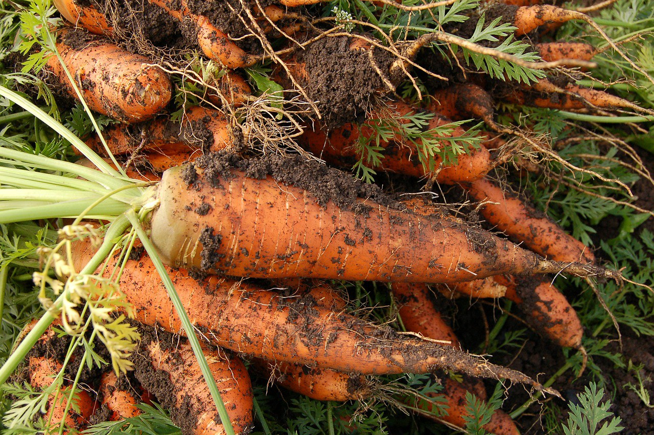 Start Gardening Differently