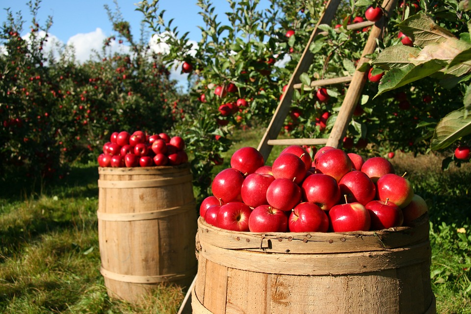 10 Trees A Prepper Needs For Food And Health