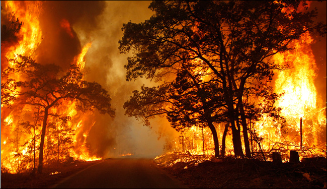 California Wildfires: Lessons To Learn For Survival