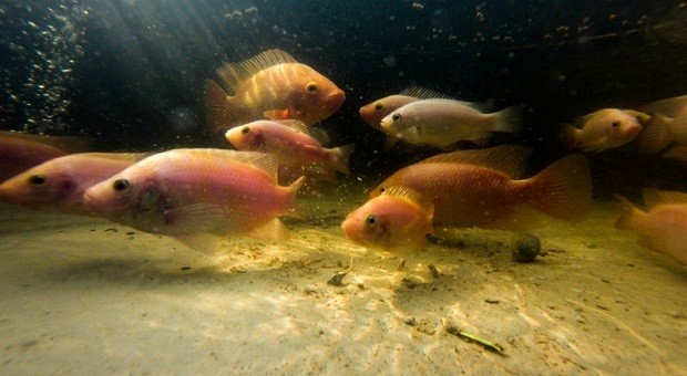 12 Troubles & Solutions For Your Aquaponics System