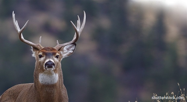 Deer Hunting: Best Practices For The Novice