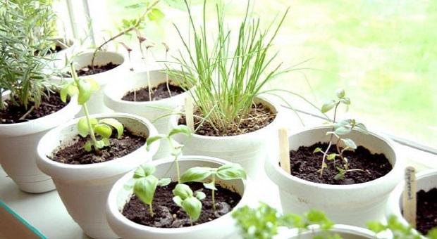 Survival Garden: 4 Edible Plants To Grow Indoors