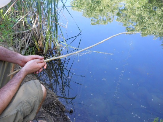 Survival Fishing: Making A Primitive Fish Trap